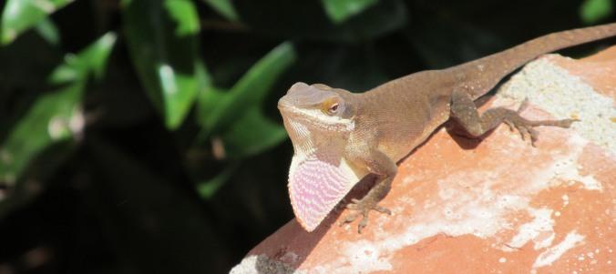 Scampering Lizard